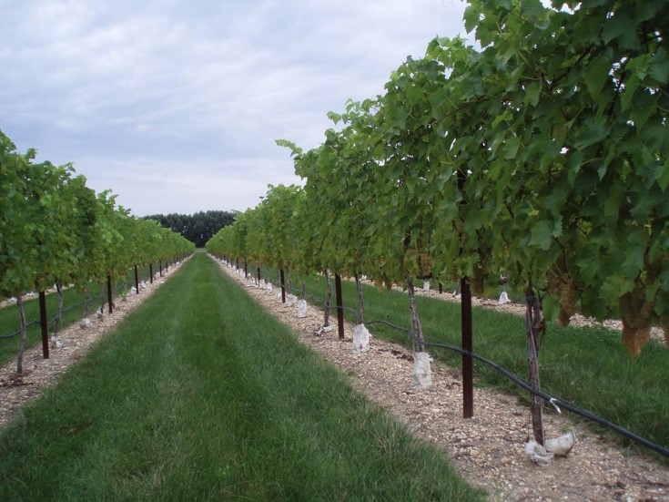 New Jersey Center for Wine Research and Education