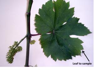 leaftosample