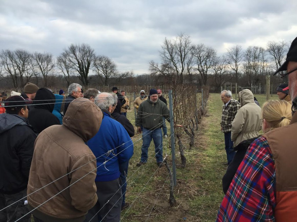 vineyardpruning