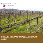 How to Conduct Research in the Vineyard
